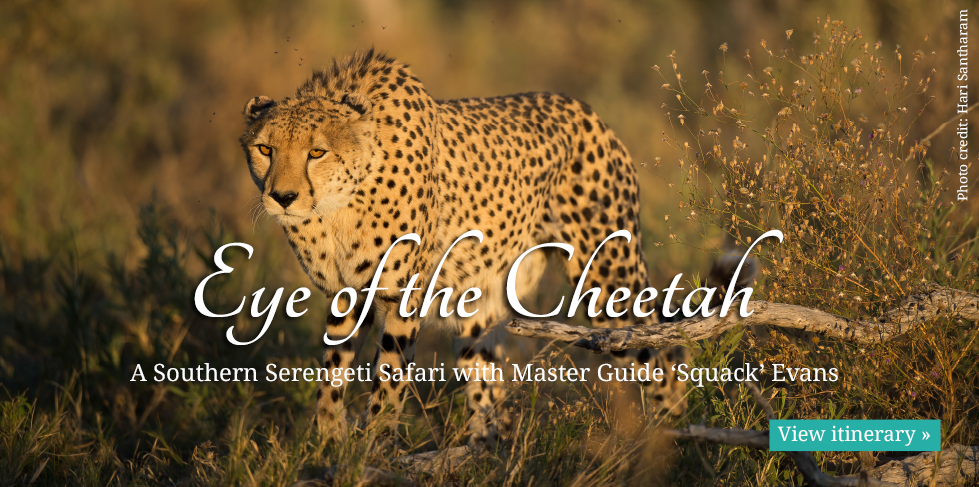 chalo-africa-safaris