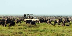 chalo africa serengeti migration