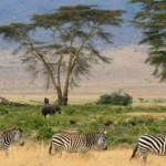 Tanzania Safari from India | Africa Safari Tips