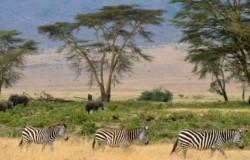 Serengeti, Tanzania safari from India. Image credit: Gary.